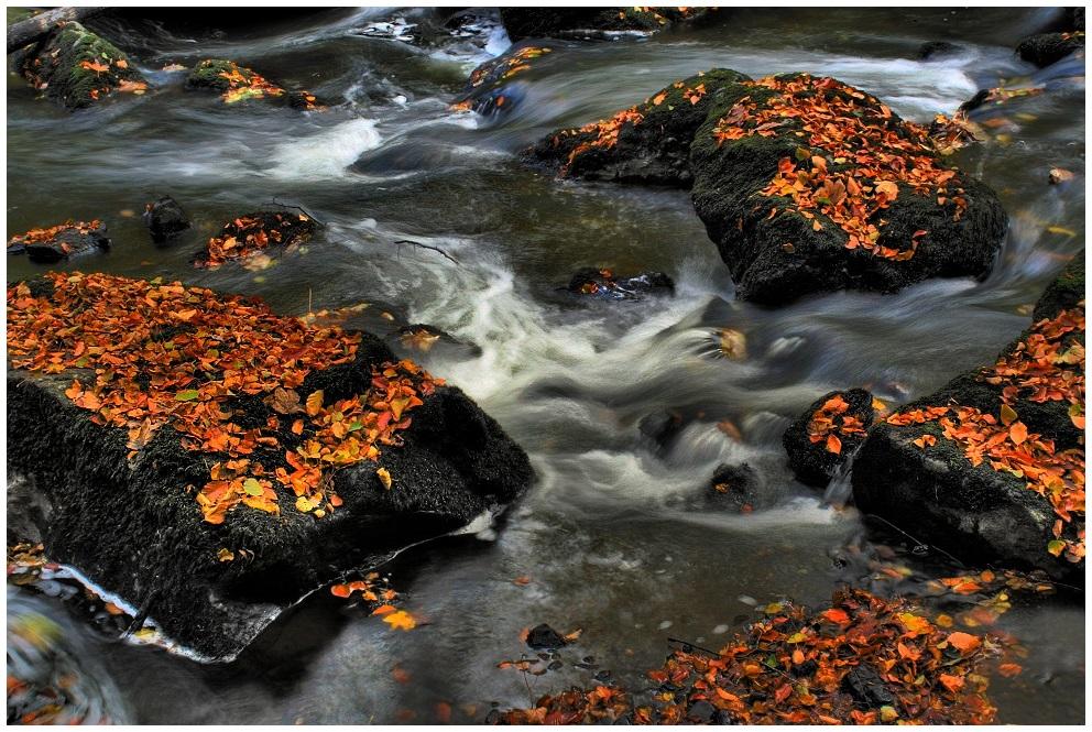 Herbst im Triebtal