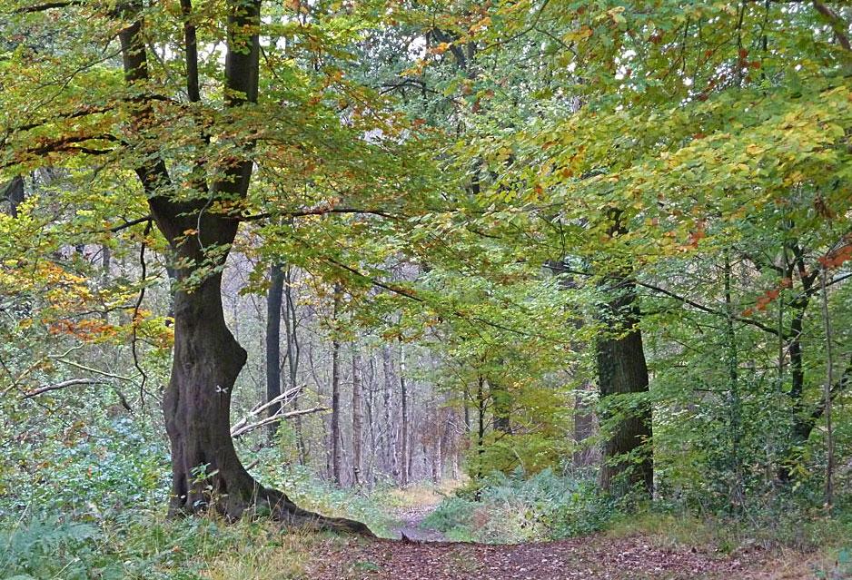 Herbst im Venner Moor