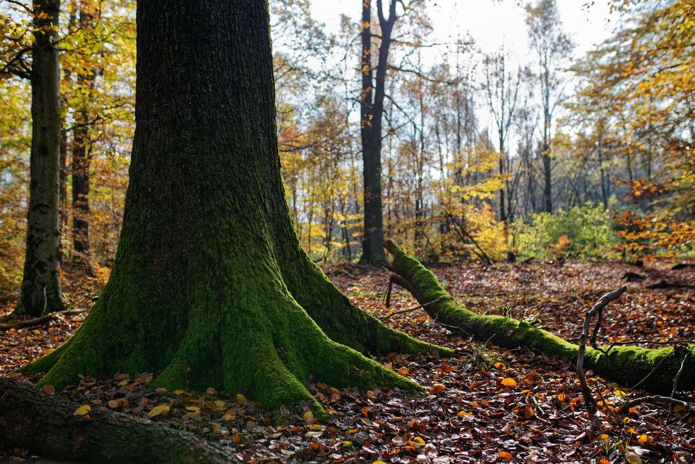 herbst im wald foto  bild  wald bäume natur bilder auf