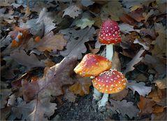 Herbst im Wald ...