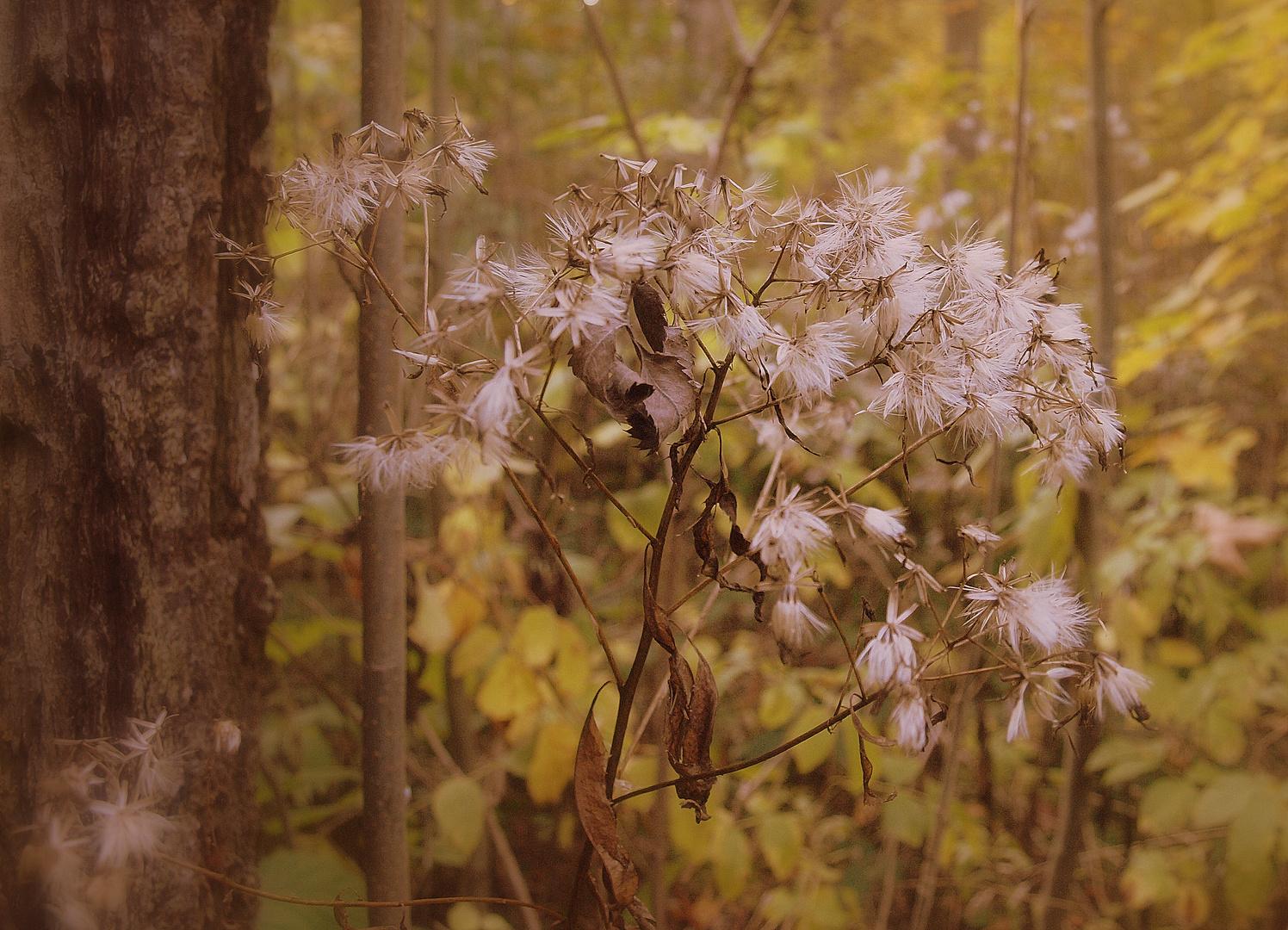 Herbst im Wald.....