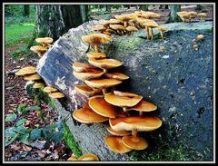 Herbst im Wald II