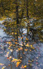 Herbst im Wandsbeker Gehölz (I)