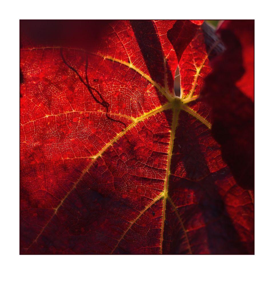 Herbst im Weinberg -3-