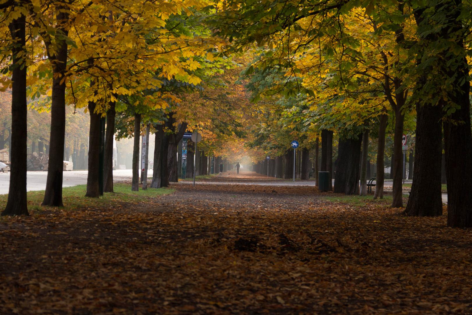 Herbst im Wiener Prater