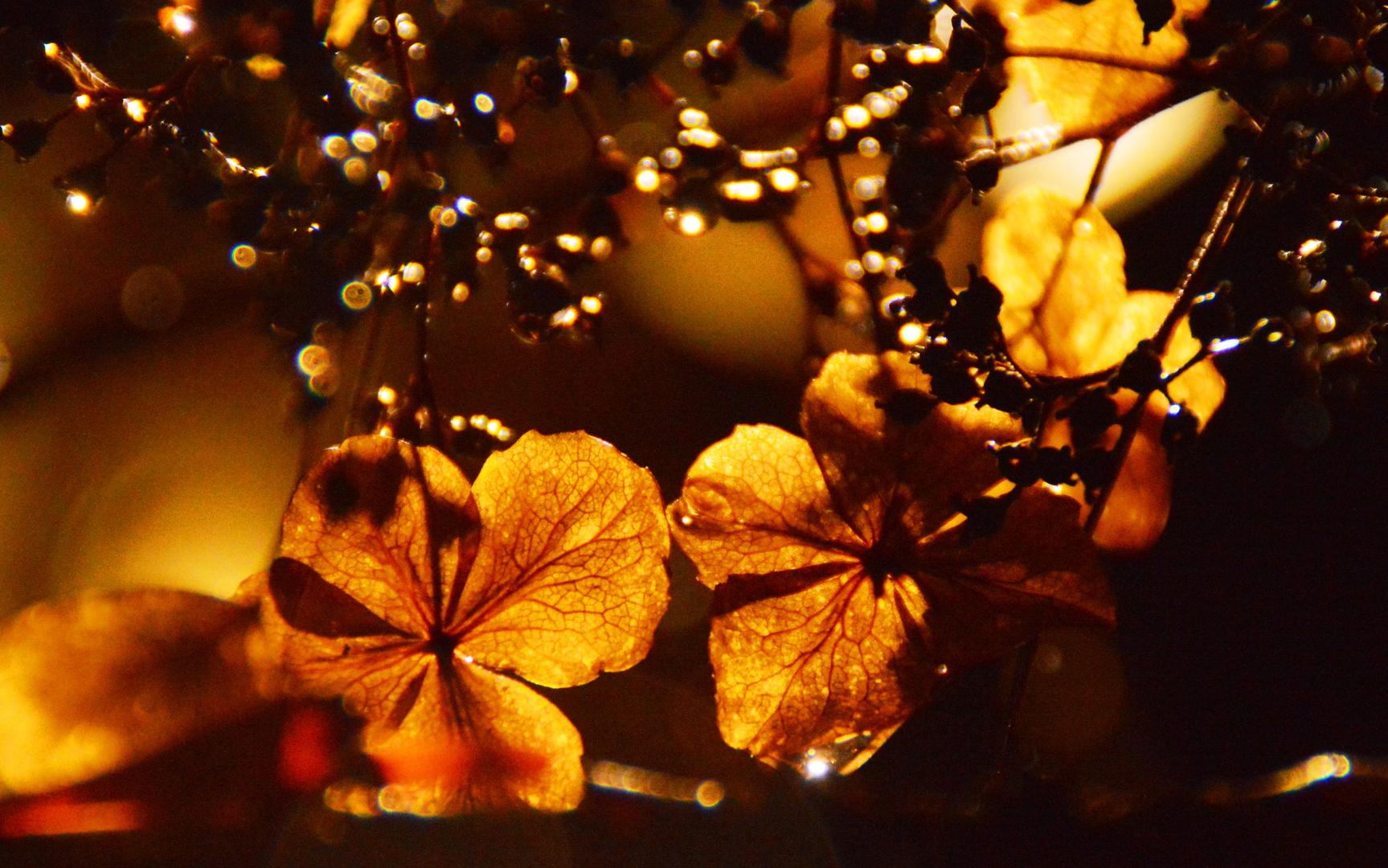 Herbst im Winter