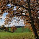 *Herbst im Wittlicher Tal*