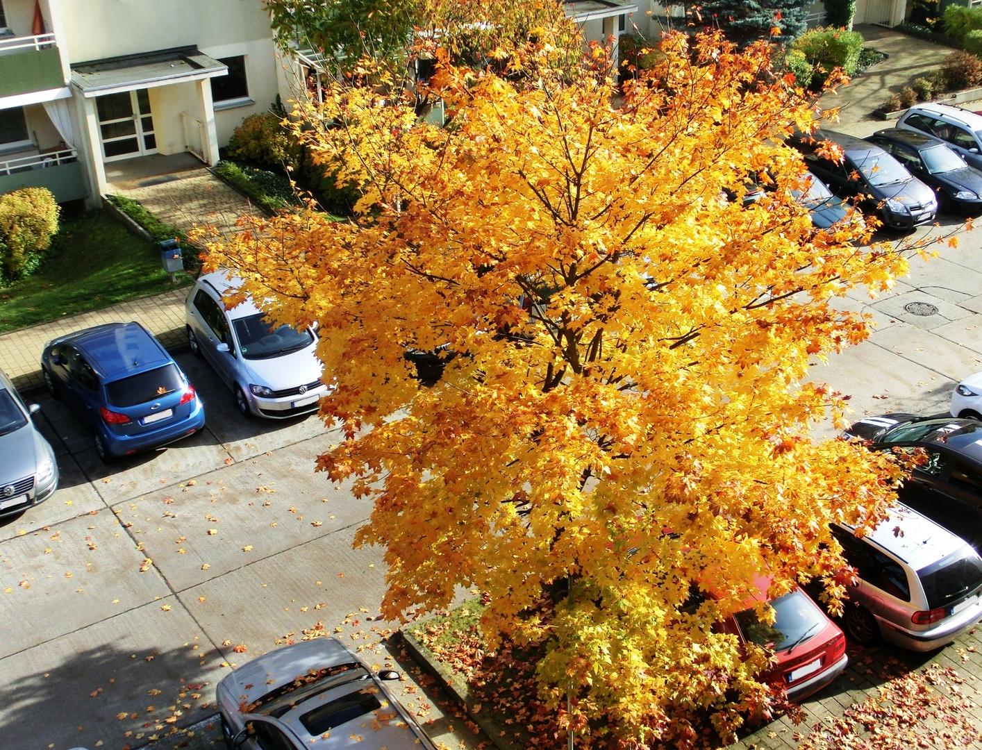 Herbst im Wohngebiet