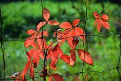 Herbst im Zaun