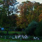 Herbst im Zoo