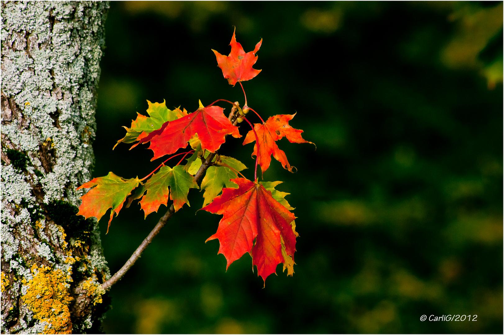 Herbst Impression / 01