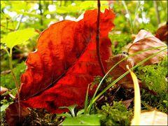 """Herbst- Impression 1"""