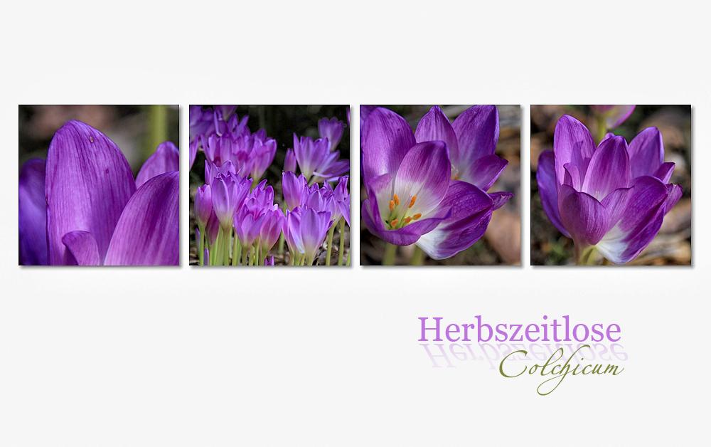 HERBST-IMPRESSION -3-