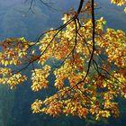Herbst - Impression