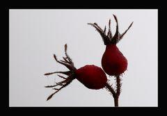 """Herbst-Impression"""