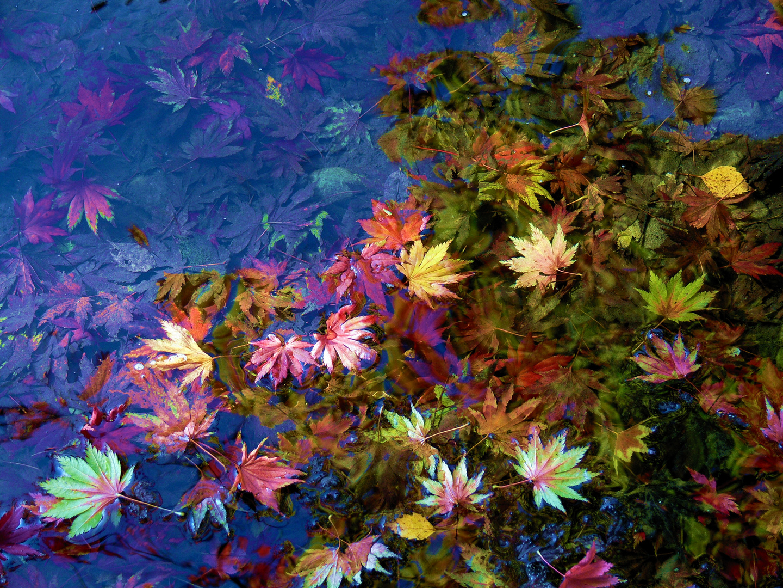 Herbst-Impression I