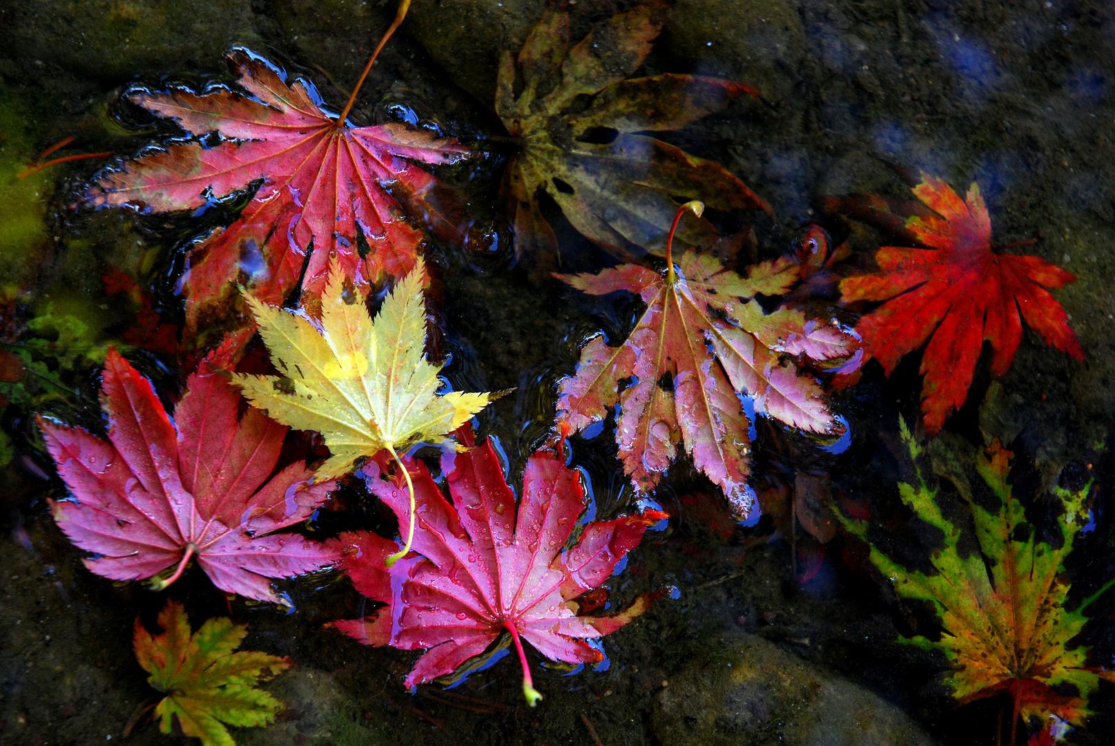 Herbst-Impression II