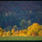 Herbst-Impression im Weserbergland (3-D-Effekt !)