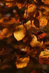 """"""" Herbst - Impressionen """""""