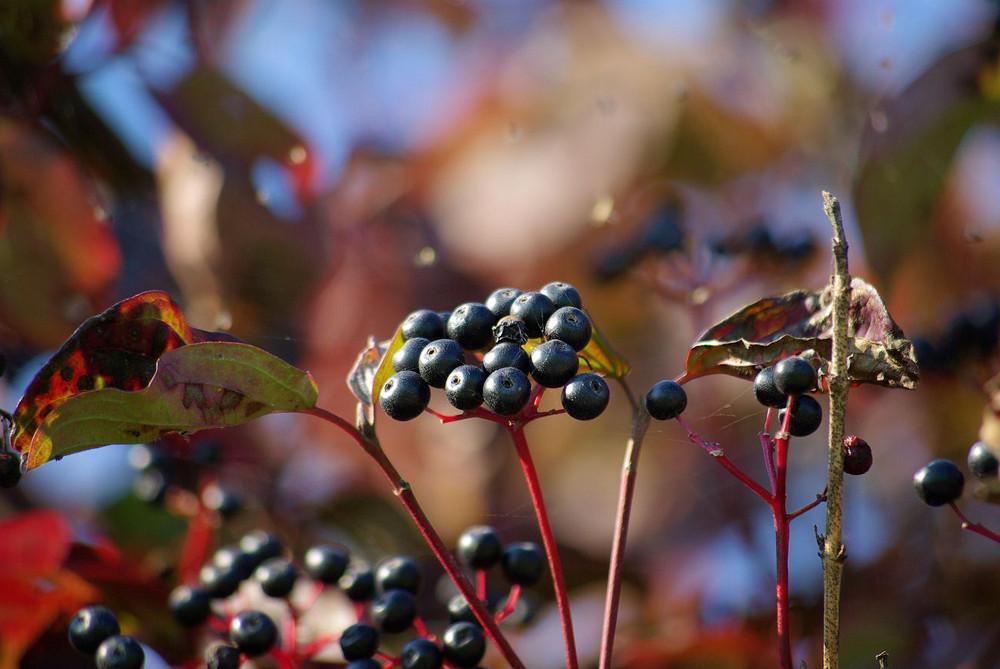 Herbst-Impressionen 1