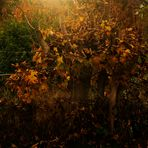 Herbst Impressionen 19
