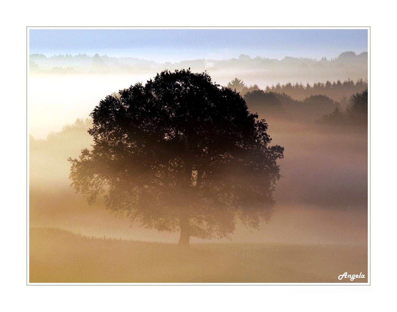 ~ Herbst - Impressionen 3 ~