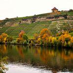 Herbst Impressionen  am Neckar 1