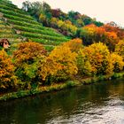 Herbst Impressionen am Neckar  8