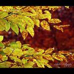 Herbst-impressionen IV