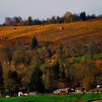 Herbst Impressionen rund um Marbach 20