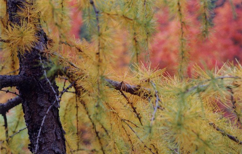 Herbst in Alpen