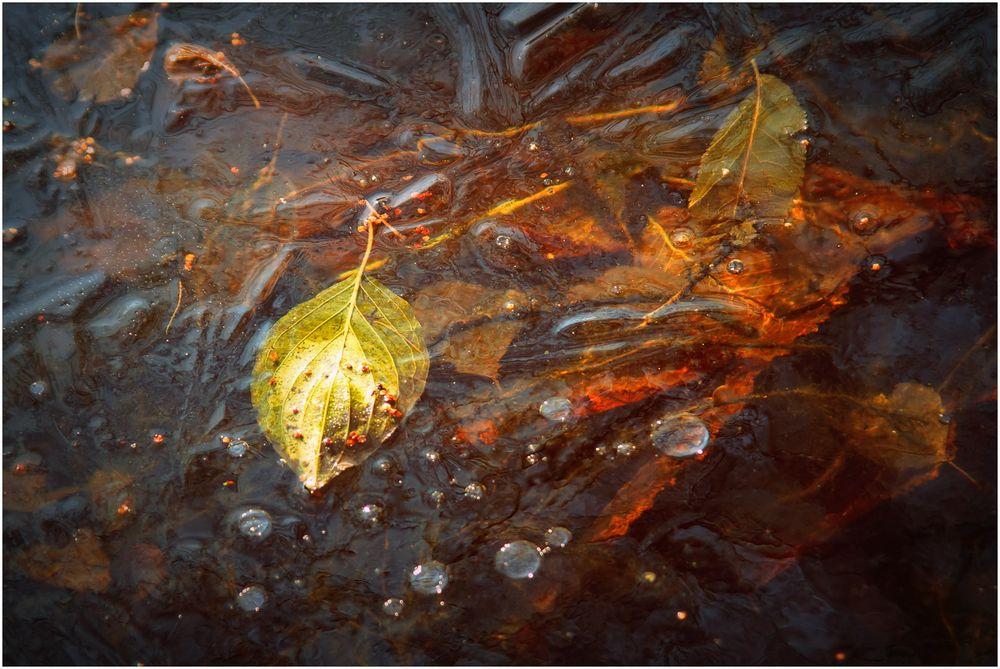 Herbst in Aspik
