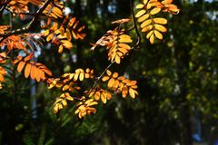 Herbst in Banneux D71 8403