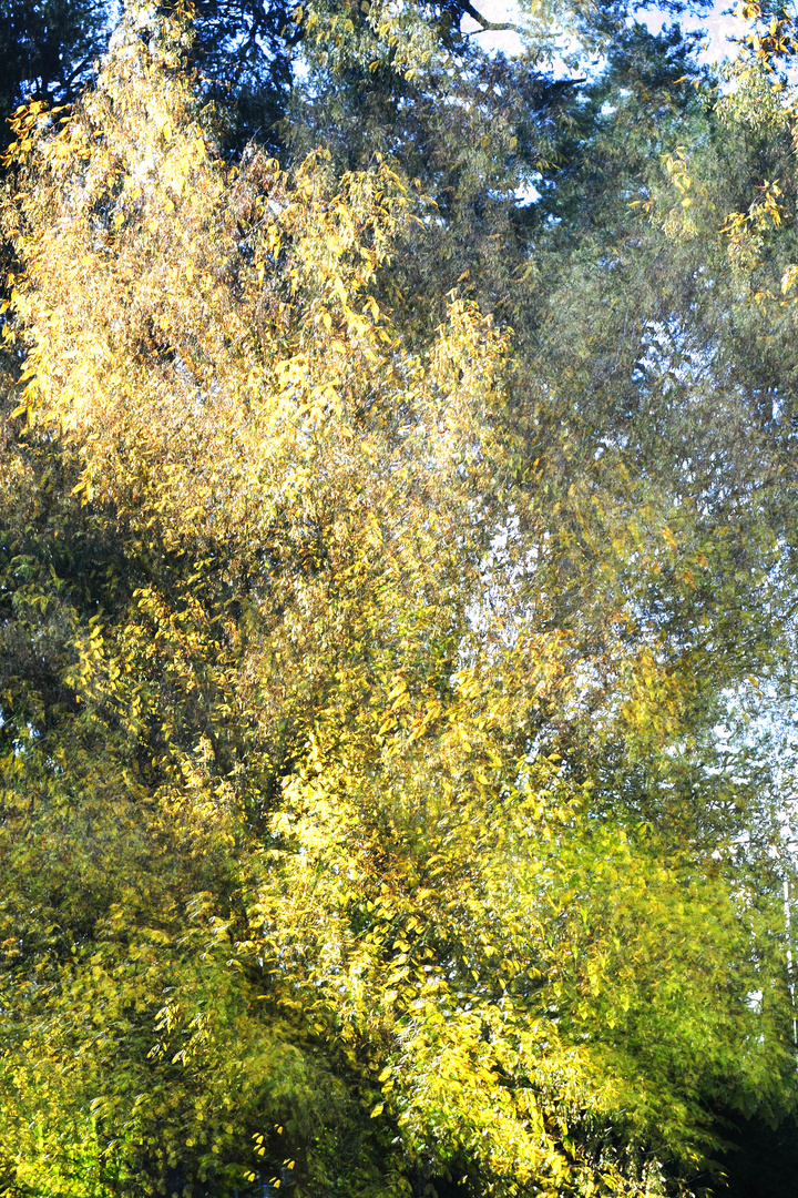 Herbst in Banneux KDL2155