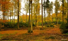 Herbst in Bayern