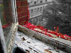 Herbst in Beelitz 2