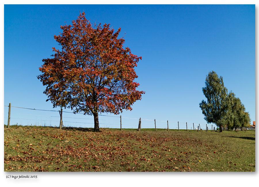 Herbst in Berg