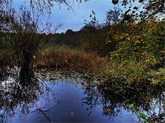 Herbst in Bönen (3)