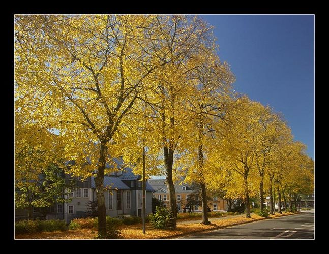 Herbst in Clausthal