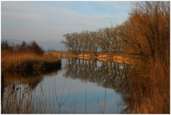 Herbst in den Donauauen