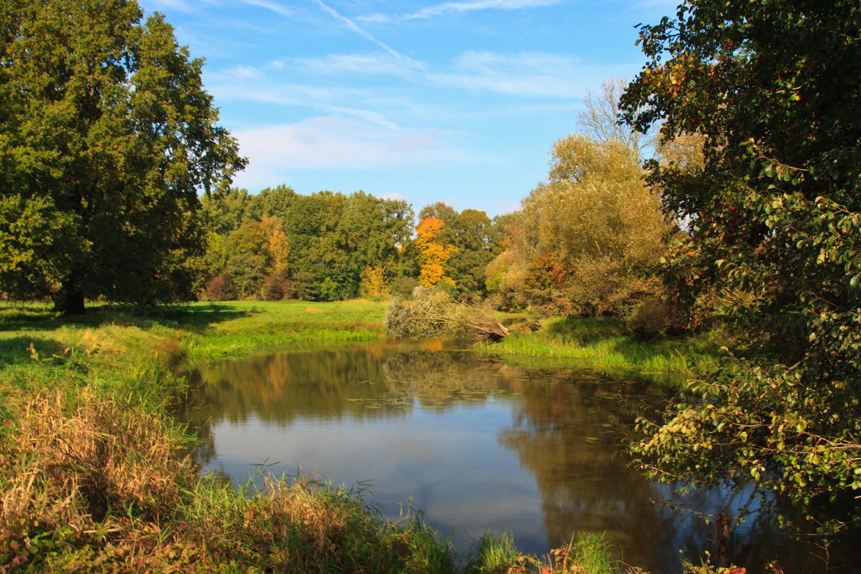 Herbst in den Elbauen