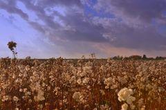 Herbst in den Salzwiesen [3]...