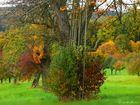 Herbst in den Steuobstwiesen