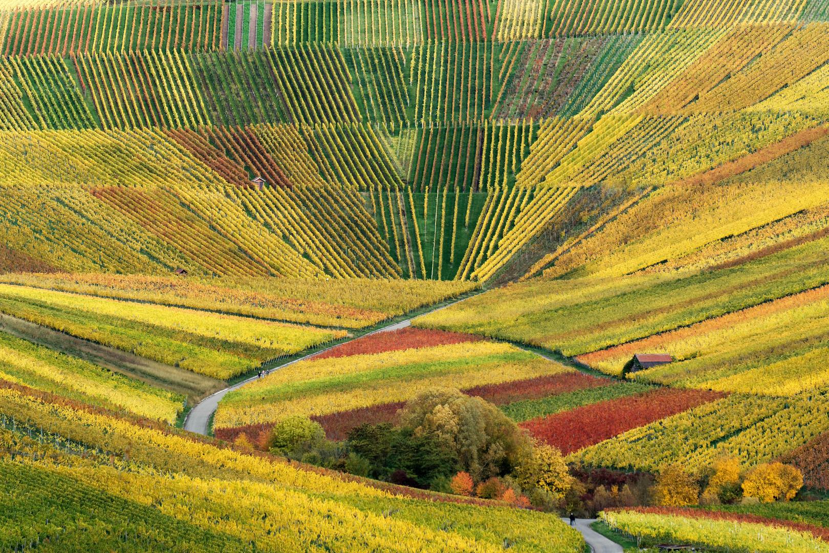 Herbst in den Weinbergen