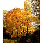 Herbst in den Weinbergen in der Pfalz.......