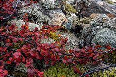 Herbst in den Westfjorden..