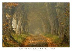 Herbst in der Allee