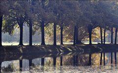 Herbst in der Aue