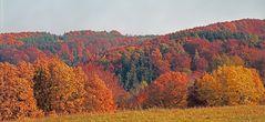 Herbst in der Eifel (2)