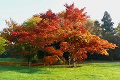 Herbst in der Flora, dem Botanischen Garten von Köln